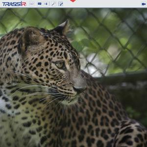 http://dssl.ru/upload/iblock/029/leopard_300.jpg